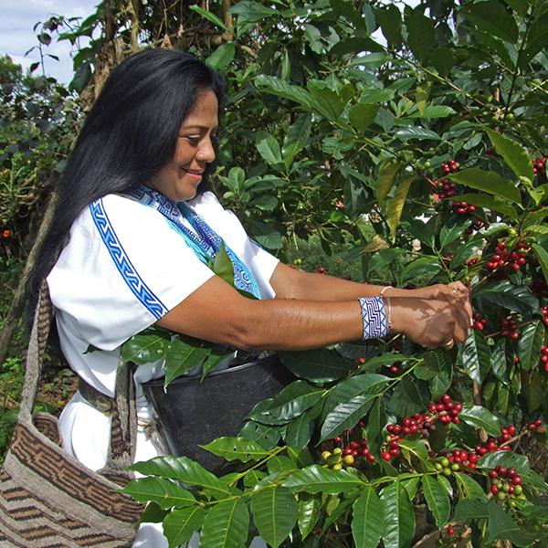 Café con aroma Caribe