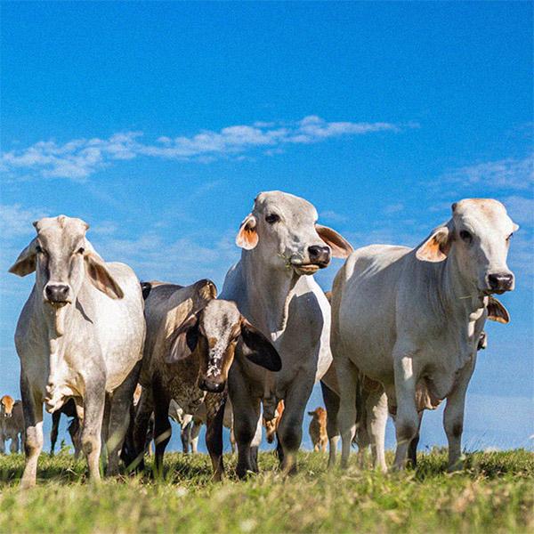 Hora de llamar las cosas por su nombre en la ganadería colombiana