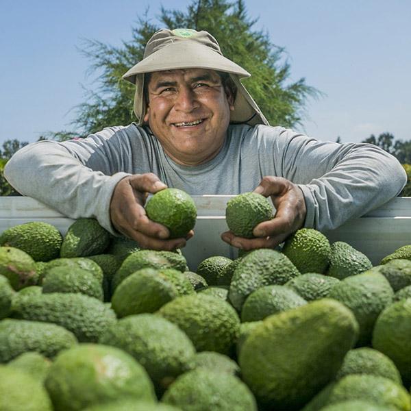 Perú es más exitoso que Colombia en la exportación de nuevos productos agrícolas… ¿por qué?