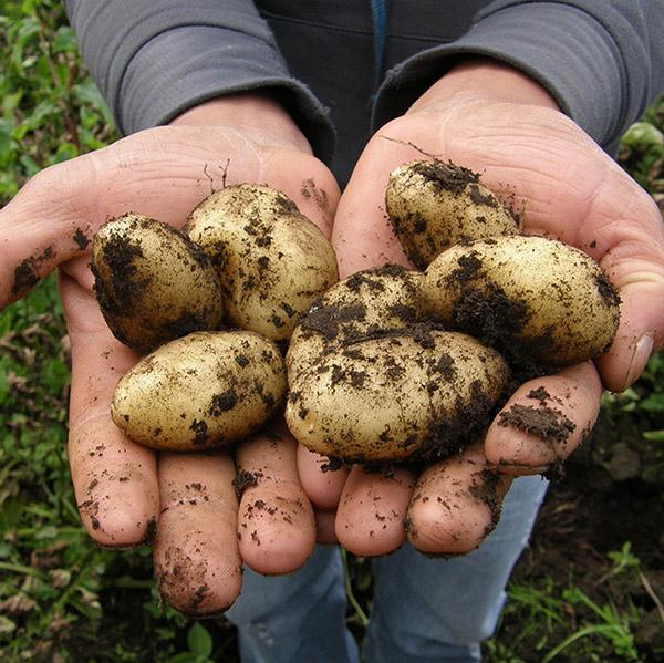 El hambre: un mal que aqueja a los pequeños productores agrícolas