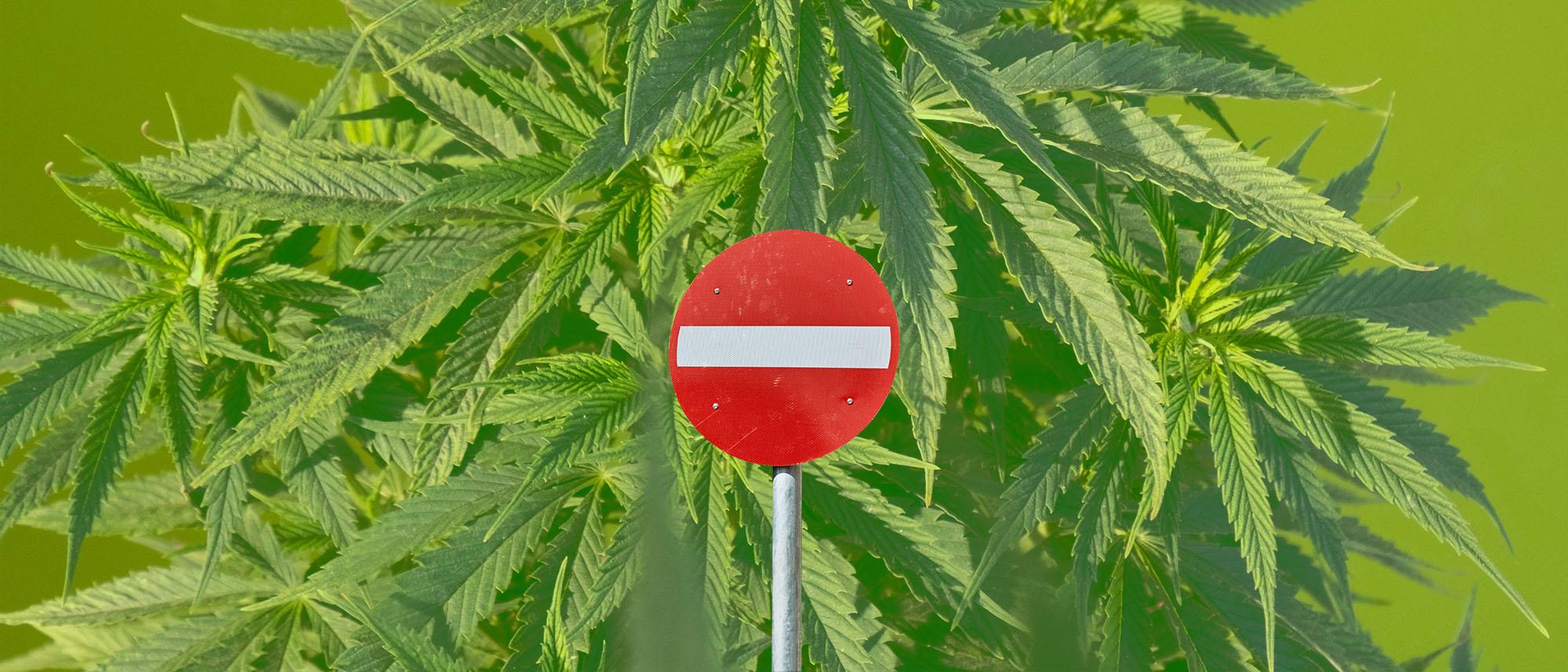 prohibicionismo-cannabis